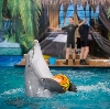 Дельфинарии, океанариумы в Петровск-Забайкальском