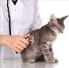 Ветеринарные клиники в Петровск-Забайкальском